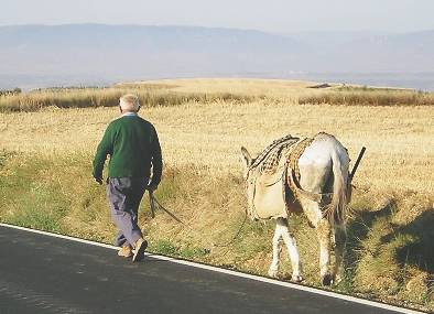Man and Donkey